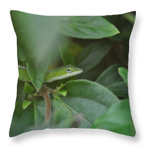 Lizard Throw Pillow featuring the photograph The Green Lizard by Tiffney Heaning