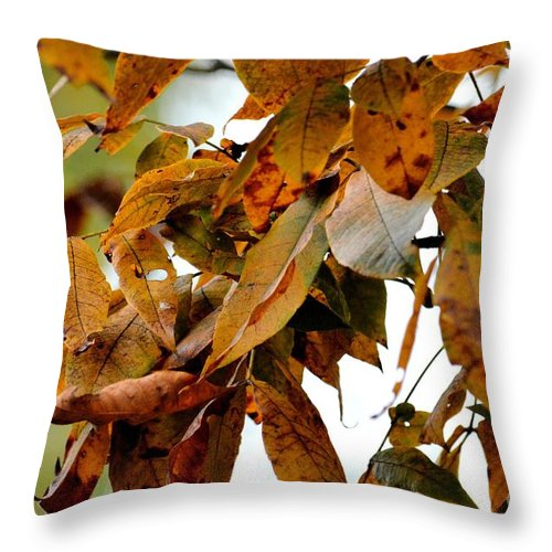 The Hickory In Autumn 2 Throw Pillow featuring the photograph The Hickory In Autumn 2 by Maria Urso