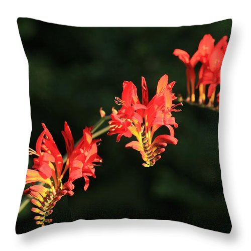 Flower Throw Pillow featuring the photograph The Hydra by Winston Rockwell