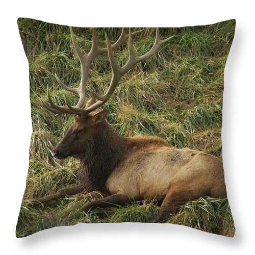 Elk Throw Pillow featuring the photograph The King by Trish Tritz