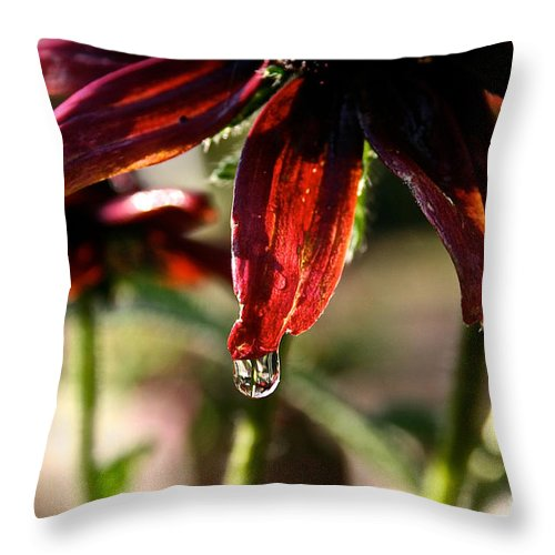Flower Throw Pillow featuring the photograph The Last Drop by Susan Herber