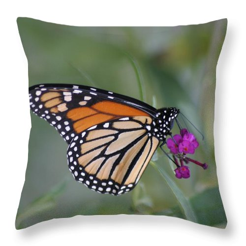 Butterfly Throw Pillow featuring the photograph The Last Flower by Living Color Photography Lorraine Lynch