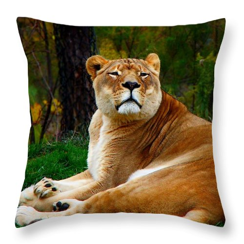 Lion Throw Pillow featuring the photograph The Lioness by Davandra Cribbie