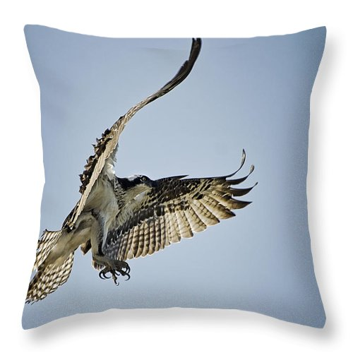 Osprey Throw Pillow featuring the photograph The Magnificent Osprey by Saija Lehtonen