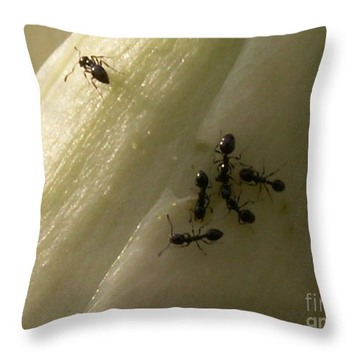 Insects Throw Pillow featuring the photograph The Meeting by Jim Caudill