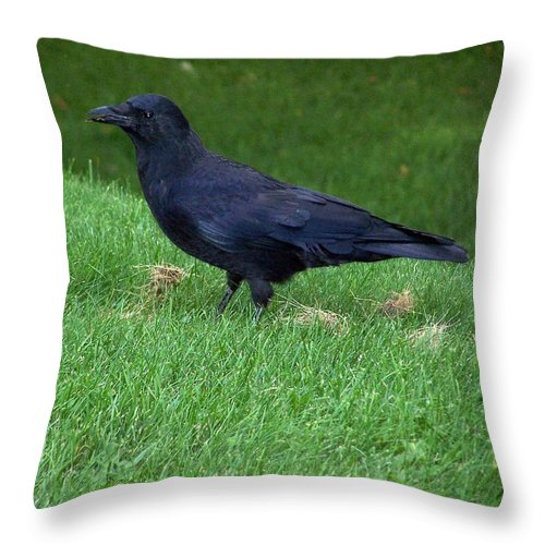 Raven Throw Pillow featuring the photograph The Messenger by Susan Saver