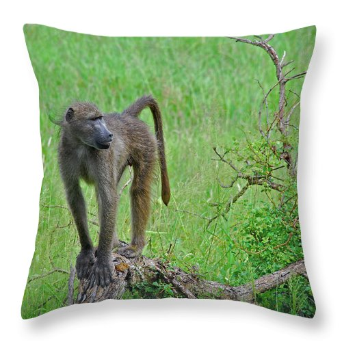 Baboon Throw Pillow featuring the photograph The Mighty Baboon by Sarah E Ethridge