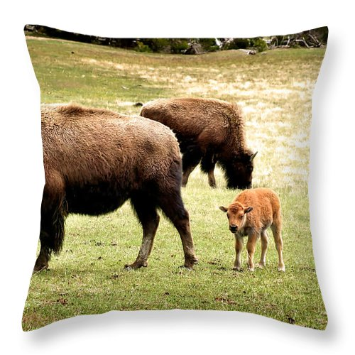 Bison Throw Pillow featuring the photograph The Mighty Bison by Ellen Heaverlo