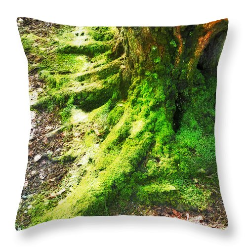 Moss Throw Pillow featuring the photograph The Moss Covered Roots by Steve Taylor