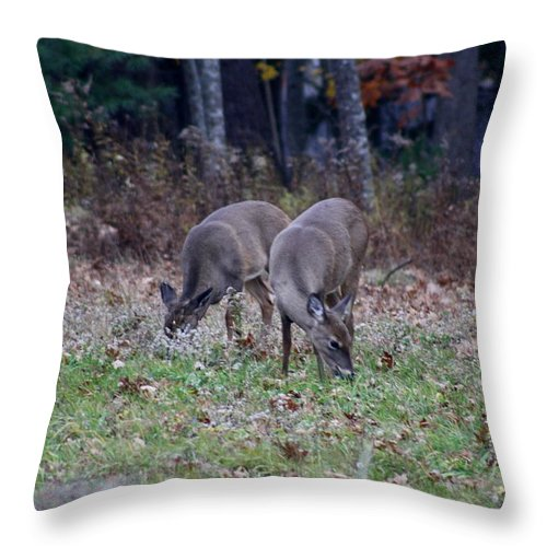 Deer Throw Pillow featuring the photograph The Next Generation by Greg DeBeck