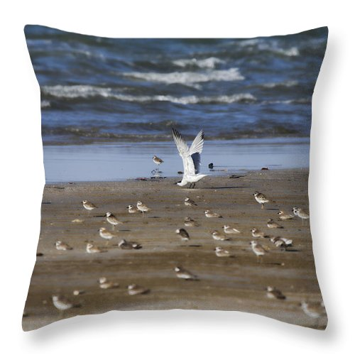 Wading Birds Throw Pillow featuring the photograph The Odd One Out V2 by Douglas Barnard