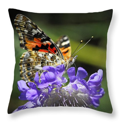 Painted Lady Butterfly Throw Pillow featuring the photograph The Painted Lady Butterfly by Saija Lehtonen