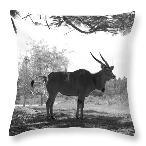 Animal Throw Pillow featuring the photograph The Post Card In Black And White by Rob Hans