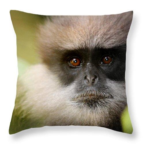 Monkey Throw Pillow featuring the photograph The Purple-faced Langur. Nuwara Eliya.sri Lanka by Jenny Rainbow