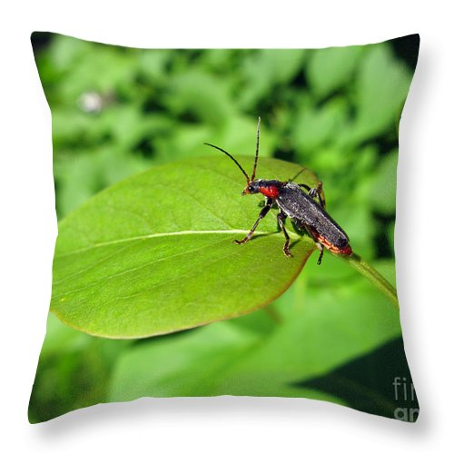 Nature Throw Pillow featuring the photograph The Rednecked Bug On The Leaf by Ausra Huntington nee Paulauskaite