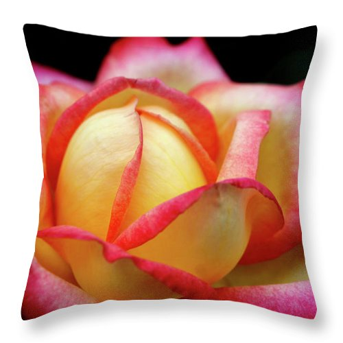 Rose Throw Pillow featuring the photograph The Scent Of A Rose by Jane Coenen