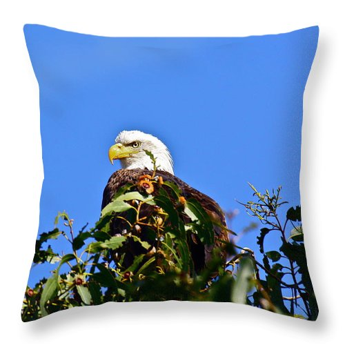 Birds Throw Pillow featuring the photograph The Sentinel by Diana Hatcher