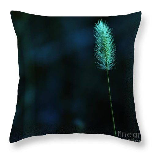 Autumn Throw Pillow featuring the photograph The Solitude Near The End by Jeff Swan