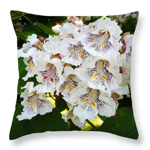 Catalpa Throw Pillow featuring the photograph The Southern Catalpa by Paul Mashburn