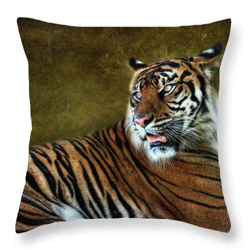 Sumatran Tiger Throw Pillow featuring the photograph The Sumatran Tiger by Saija Lehtonen