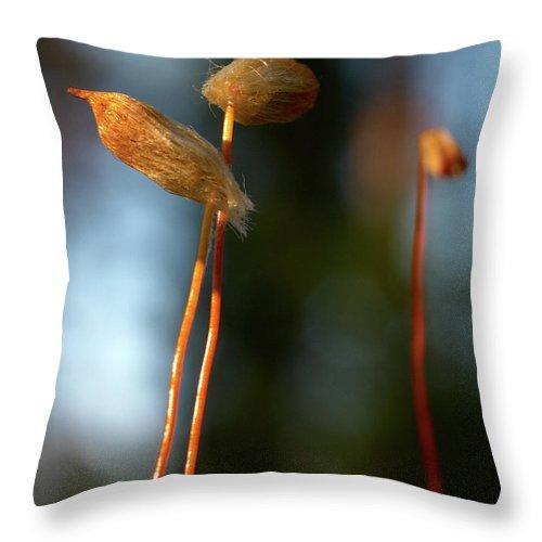 Jouko Lehto Throw Pillow featuring the photograph The Third by Jouko Lehto