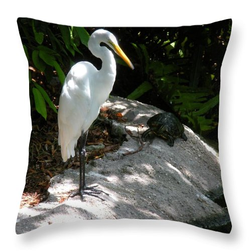 Turtle Throw Pillow featuring the photograph The Tortoise And The Heron by Maria Bonnier-Perez