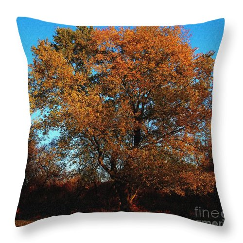 Tree Throw Pillow featuring the photograph The Tree Of Life by Davandra Cribbie