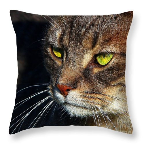 Cats Throw Pillow featuring the photograph The Watcher by Davandra Cribbie