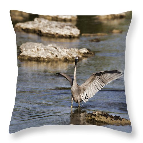 Reef Egret Throw Pillow featuring the photograph The Water Dance V4 by Douglas Barnard