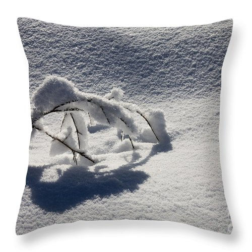 Sapling Throw Pillow featuring the photograph The Weight of Winter by Mike Dawson