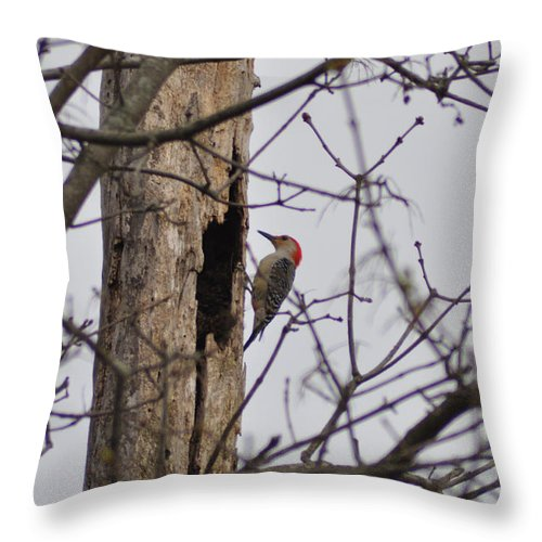 The Woodpecker Throw Pillow featuring the photograph The Woodpecker by Bill Cannon