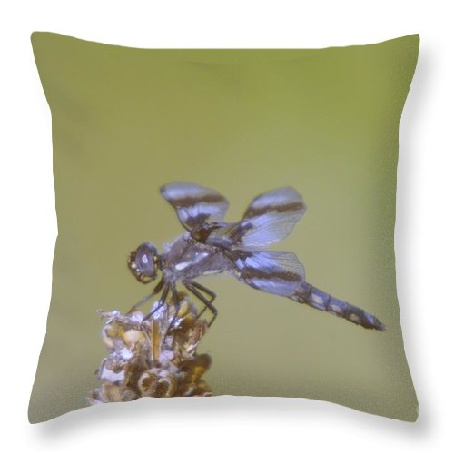 Dragonfly Throw Pillow featuring the photograph The Wounded Rests by Jeff Swan