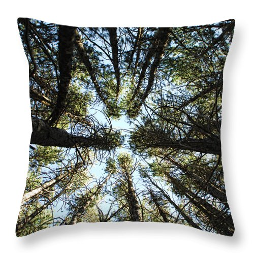 Trees Throw Pillow featuring the photograph Things Are Looking Up by Donna Blackhall