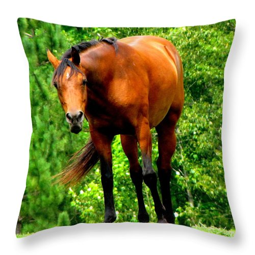 Horse Throw Pillow featuring the photograph Think I See Something by Ms Judi