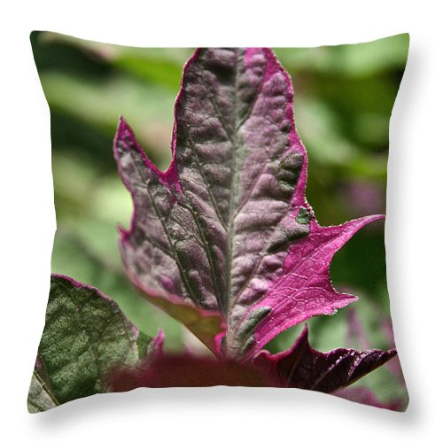 Plant Throw Pillow featuring the photograph This End Up by Susan Herber