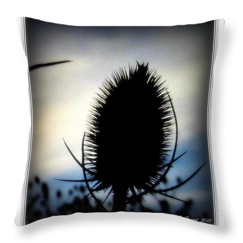 Blue Color Photographs Throw Pillow featuring the photograph Thistle In The Sky by Danielle Parent