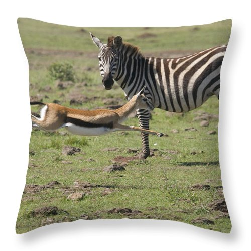 Africa Throw Pillow featuring the photograph Thomson's Gazelle Running At Full Speed by Howard Kennedy