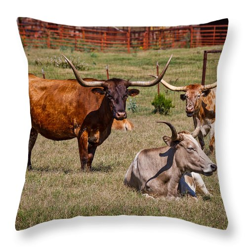 Afternoon Throw Pillow featuring the photograph Three Amigos by Doug Long