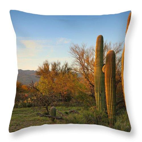 Saguaro Throw Pillow featuring the photograph Three Amigos by Tamara Brown