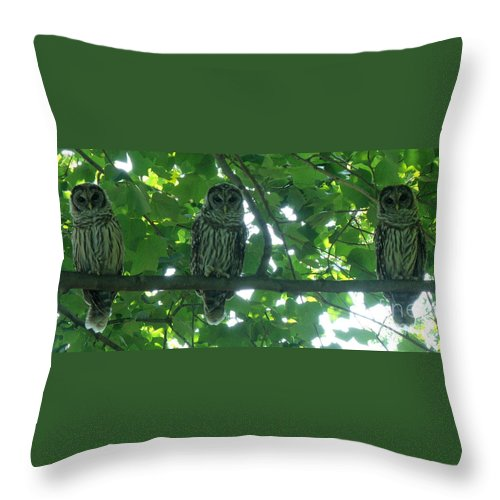 Owls Throw Pillow featuring the photograph Three Barred Owls by Lainie Wrightson