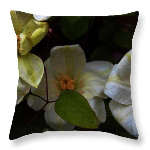 Flower Throw Pillow featuring the photograph Three Clematis More by John Stuart Webbstock