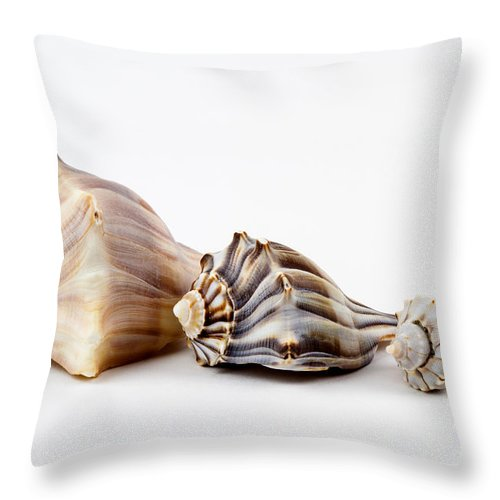 Busycon Carica Throw Pillow featuring the photograph Three Knobbed Whelks. by Dawna Moore Photography