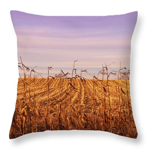 Cornfield Throw Pillow featuring the photograph Through The Cornfield by Rachel Cohen