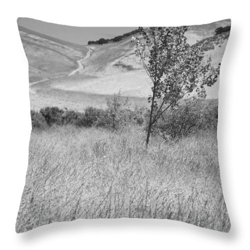 Los Alamos Throw Pillow featuring the photograph Through The Tall Grasses by Kathleen Grace