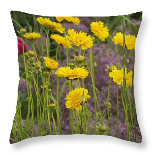 Tick Seed Throw Pillow featuring the photograph Tick Seed 2229 by Michael Peychich