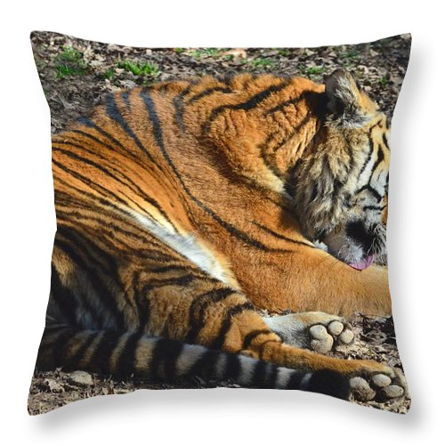 Tiger Throw Pillow featuring the photograph Tiger Behavior by Sandi OReilly