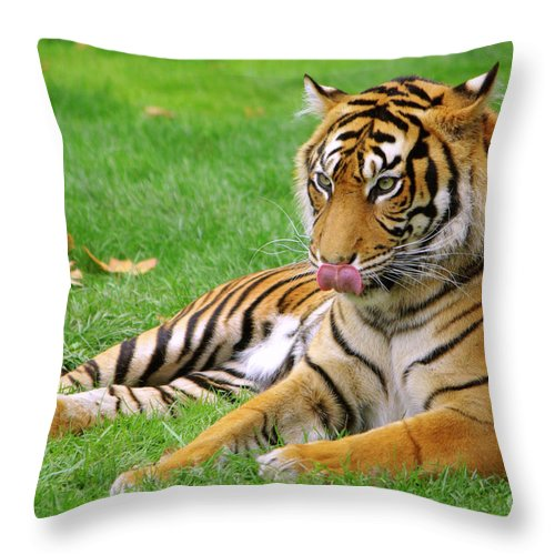 Anger Throw Pillow featuring the photograph Tiger by Carlos Caetano