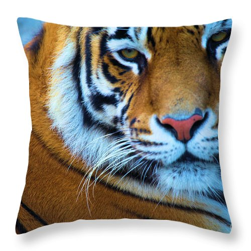 Bengal Tiger Throw Pillow featuring the photograph Tiger Eyes by Adam Jewell