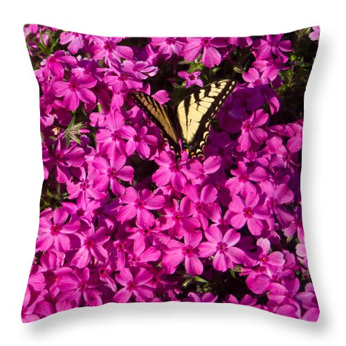 Tiger Throw Pillow featuring the photograph Tiger In The Phlox 5 by Douglas Barnett