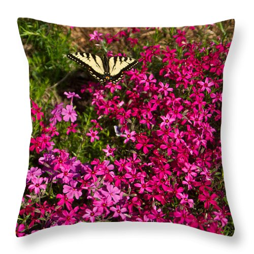 Tiger Throw Pillow featuring the photograph Tiger In The Phlox 6 by Douglas Barnett